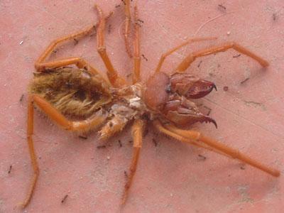 calitzdorp-spinnekop2