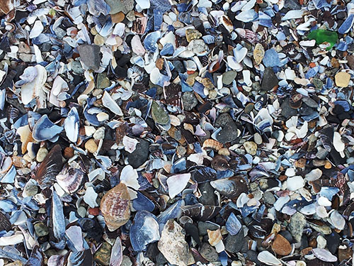 brokenpath_shells