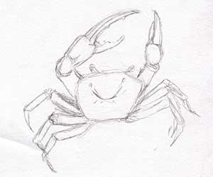 crab_top