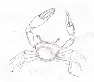crab_top_simple
